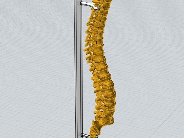 Bộ xương này được tối ưu thiết kế 3D với nhiều khớp nối linh hoạt. Tất cả các khớp đã được chừa dung sai phù hợp cho công nghệ tạo mẫu nhanh FDM ( giá rẻ)